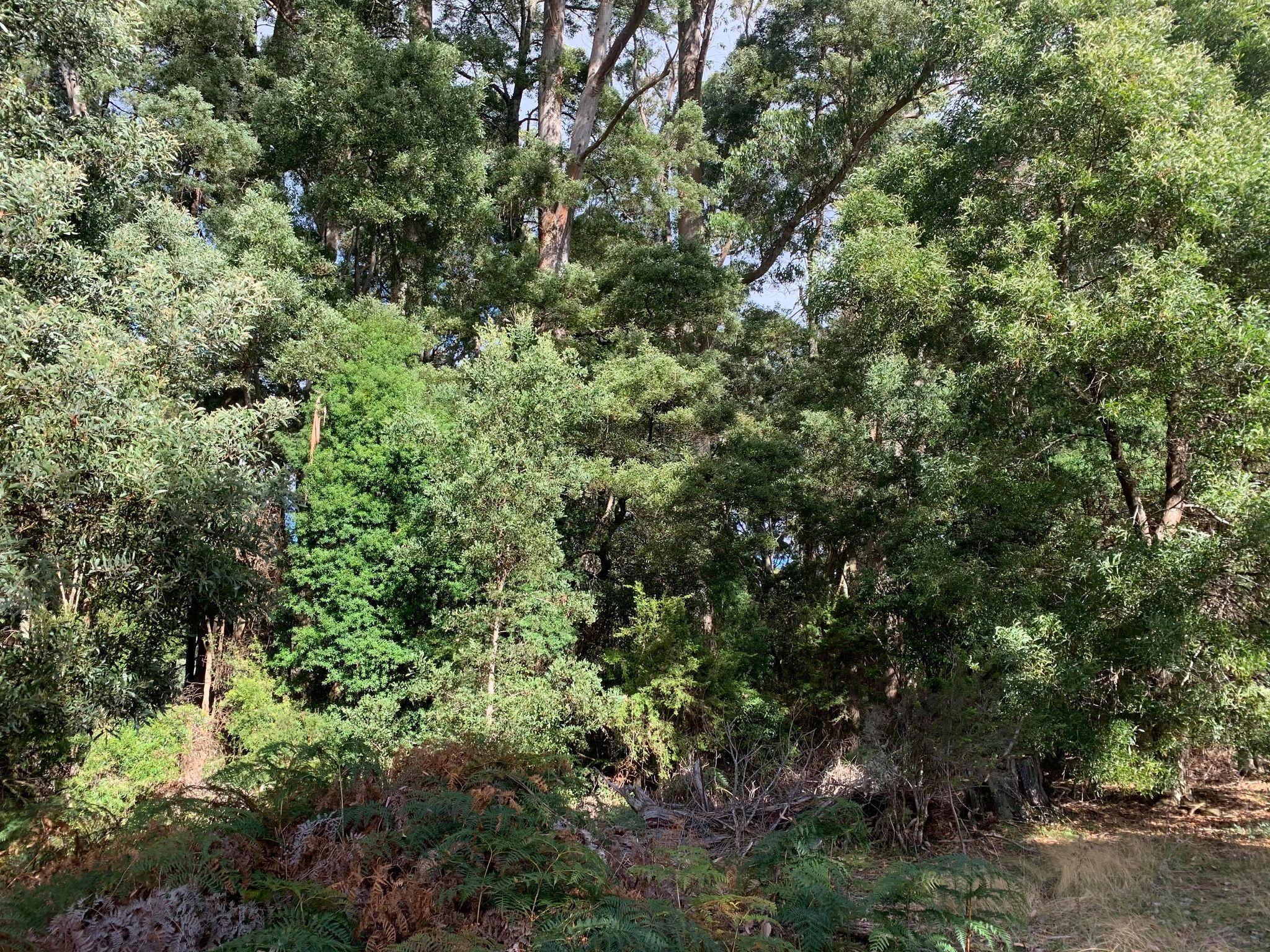 property image 2263390