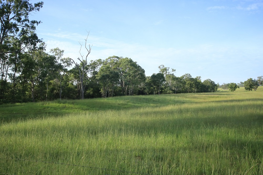 EXCELLENT STARTER BLOCK – 156.054HA VERY WELL DEVELOPED CATTLE  COUNTRY