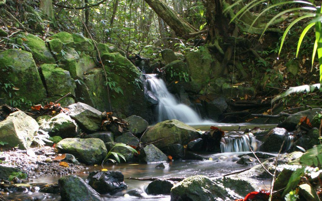 Dual Living…Magical Rainforest Sanctuary!