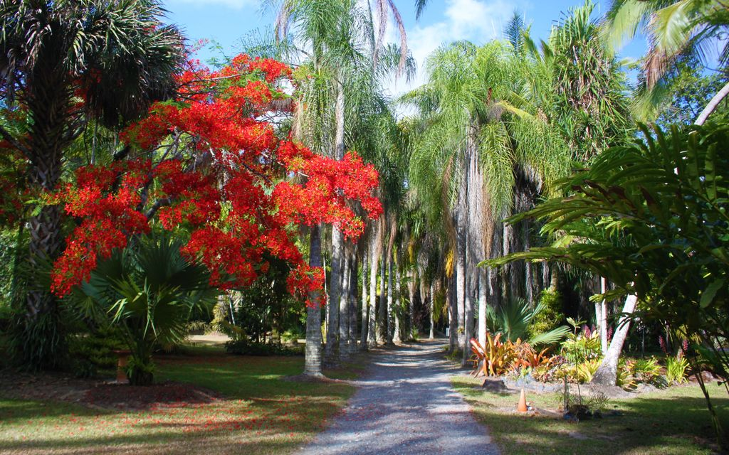 HOUSE, COTTAGE, & CAMPGROUND IN THE HINTERLANDS OF PORT DOUGLAS