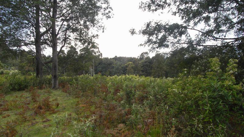 property image 53715