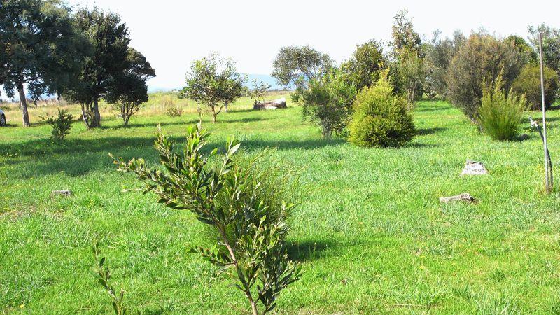 property image 53813