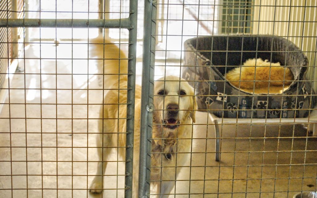METUNG KENNELS.  ASKING PRICE REDUCED BY $100,000
