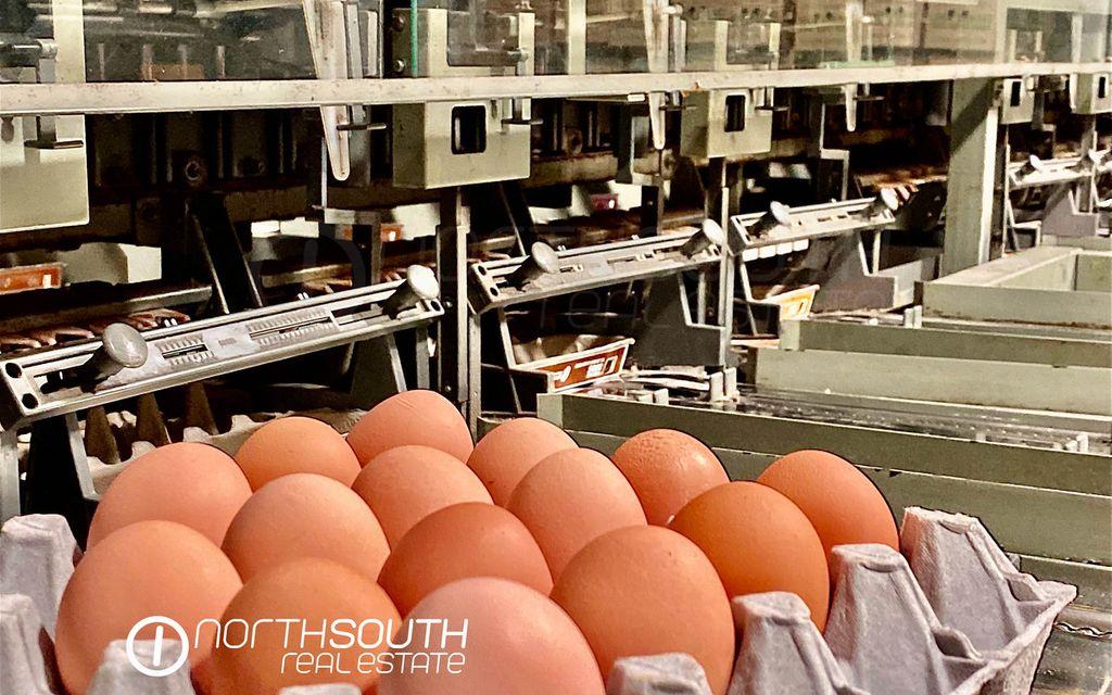 Famous Jacobs Well Egg Farm + 3 Houses = Cashflow + Future Development Potential