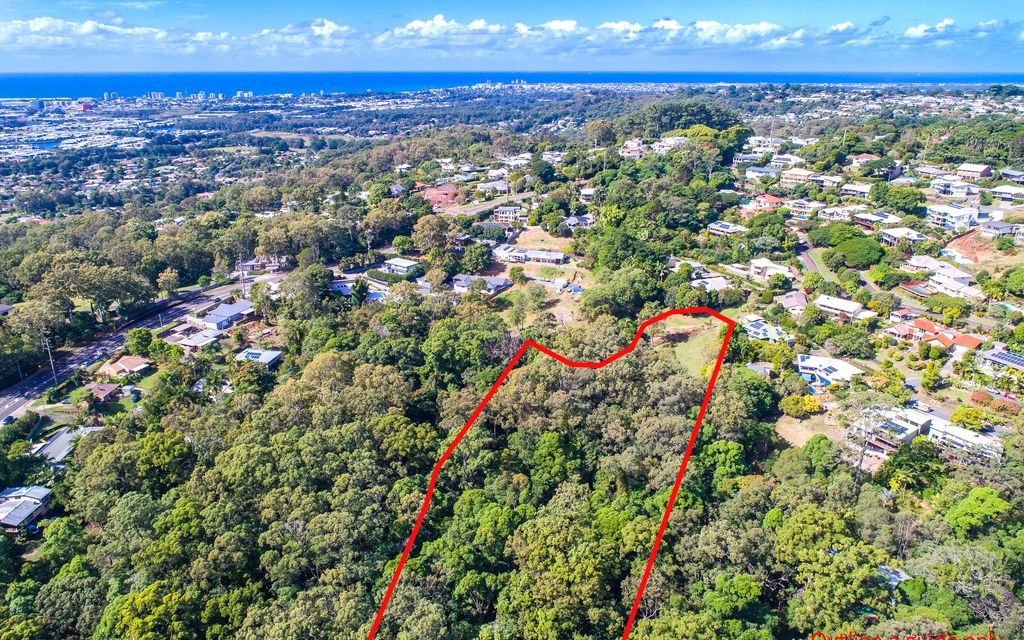 Exceptionally Rare – Buderim Rainforest Gem Will Steal Your Heart!