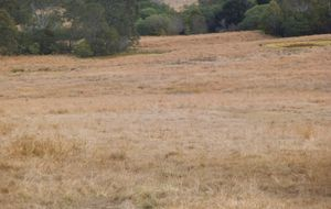 """ 291 acres of grazing land close to Childers"""