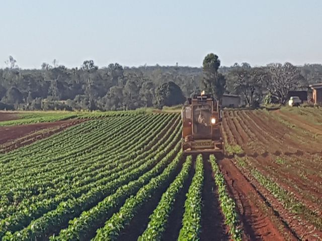 OVER 200 ACRES PRIME RED SOIL