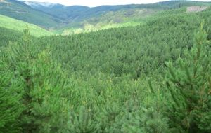 Forestry Investment - 429 ha  Pinus Radiata Forest  Masterton NZ